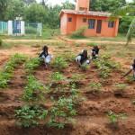 JNV-Farming